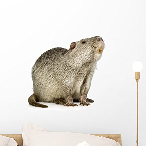 Nutria Fur - Wallmonkeys Coypu or Nutria (myocastor Coypus) Wall Decal Peel and Stick Graphic WM203664 (18 in H x 18 in W)