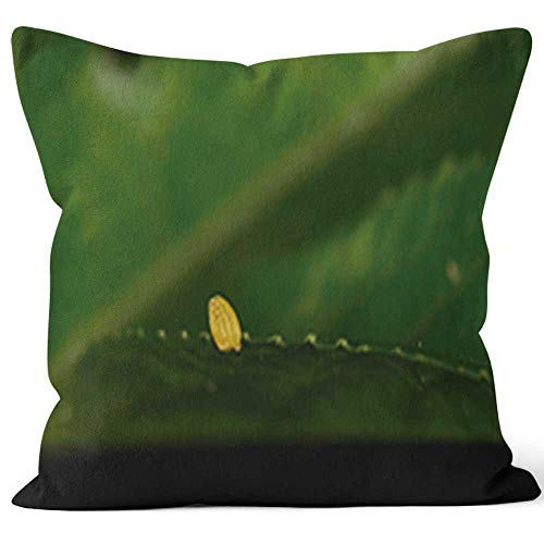Single Zebra Longwing Butterfly Egg on Passion Vine Leaf Edge Burlap Pillow,HD Printing for Couch Sofa Bedroom Livingroom Kitchen Car