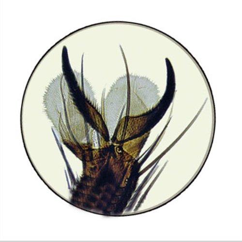 24 lamelles pr u00e9par u00e9e pour tous les microscopes 12 insectes
