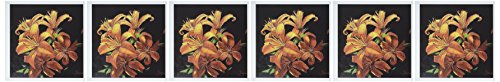 (3dRose Bright Orange Speckled Tiger Lilies Floating - Greeting Cards, 6 x 6