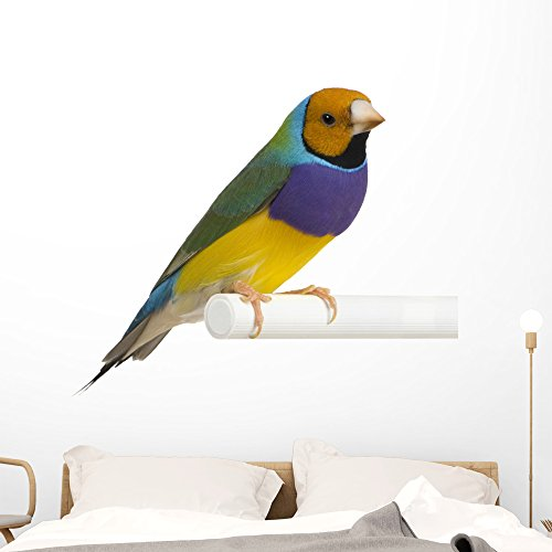 - Wallmonkeys Gouldian Finch Wall Decal Peel Stick Animal Graphics (48 in W x 42 in H) WM71411
