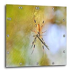 3dRose Dreamscapes by Leslie - Arachnids - Golden Silk orb Weaver Spider in Florida - 13x13 Wall Clock (DPP_292254_2)