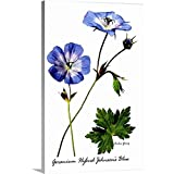 "Archie Young Premium Thick-Wrap Canvas Wall Art Print Entitled Variety of Cranesbill 32""x48"""