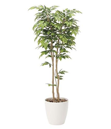 光触媒 光の楽園 人工観葉植物 ケヤキ1.8 B079NQYC69