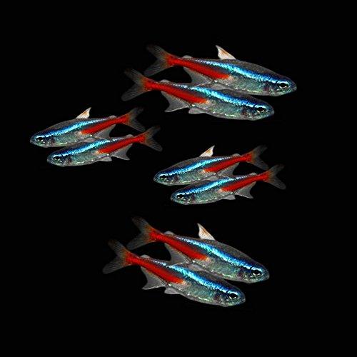 neon fish - 1