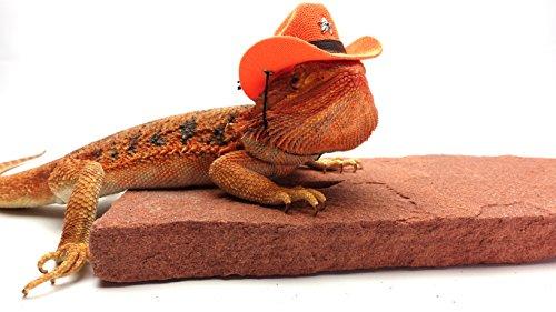 6f74035e1f4f45 Bearded Dragon Cowboy Hat, Orange - Buy Online in Kuwait. | Misc ...