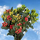 GlobalRose 240 Fresh Cut Assorted Colors Hypericum Flowers - Fresh Flowers For Birthdays, Weddings or Anniversary.