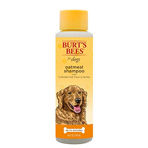 Burt's Bees Natural Oatmeal Shampoo for Dogs | Made with Colloidal Oat Flour and Honey | Best Oatmeal Dog Shampoo, 16 Ounces
