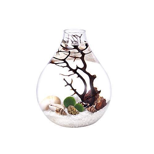 Teardrop Terrarium Mairmo kit- Natrual Gravels with Living Moss Ball, Sea Fan and Shells, Unique Mini Aquarium (White Quartz Sand)