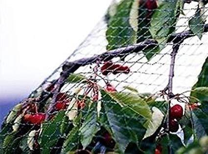 XUTONG 4m x 10m Bird Netting Green Garden Anti Bird Pond Netting for Plant Protection Mesh Netting for Pest Control Pea Fruit Netting 1.5x1.5 cm Holes