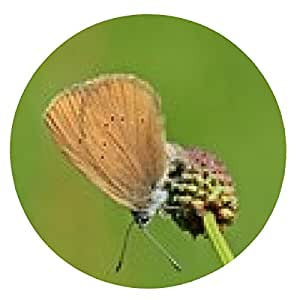 alfombrilla de ratón Oviposición la mariposa azul oscuro Burnet - ronda - 20cm