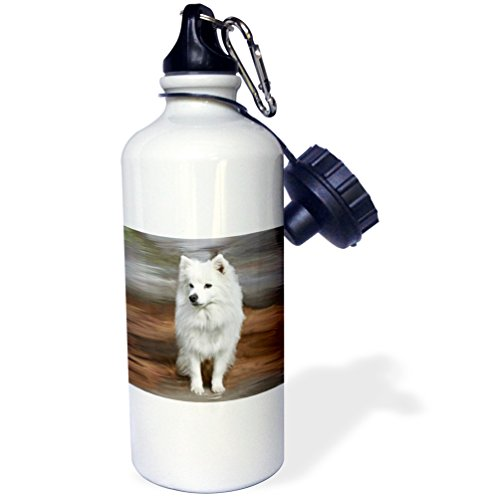 "3dRose wb_4178_1""American Eskimo Toy Dog"" Sports Water Bottle, 21 oz, White"
