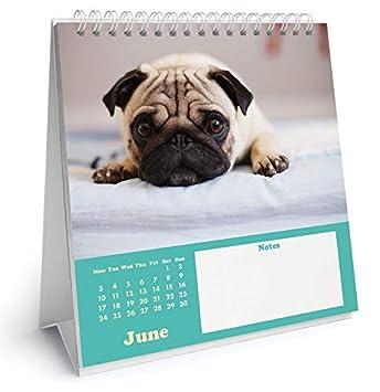 Calendario 2019 caballete Pug - perro + incluye un - Agenda ...