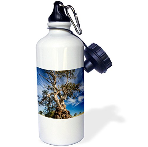 danita-delimont-australia-australia-springton-the-herbig-tree-first-home-friedrich-herbig-21-oz-spor