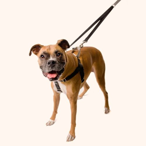 Freedom No-Pull Harness ONLY 50%OFF