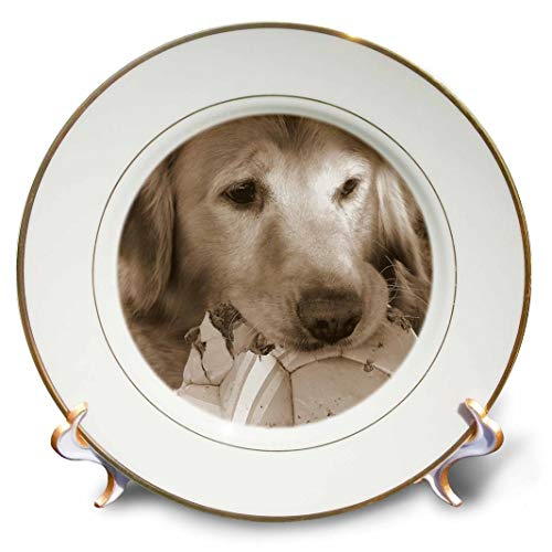 3dRose cp_10943_1 Golden Retriever by Angelandspot-Porcelain Plate, 8