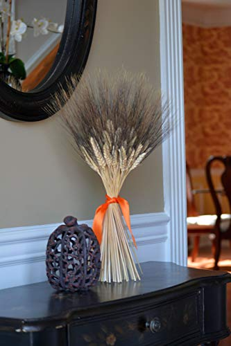 Elegant Holidays Handmade Natural Black Bearded Wheat Sheaf, Welcome Guests with Halloween, Thanksgiving decoration, Indoor Home Accent Décor, Great for Autumn with Fall Foliage Colors