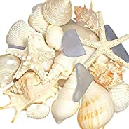 Tumbler Home Mix of Seashells with Sea Glass - Set includes white shells up to 4 inches - Home Decor, Wedding, Christmas, Cr