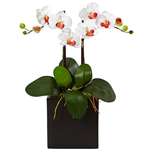 Nearly Natural Double Mini Phalaenopsis Silk Orchid in Black Vase, White