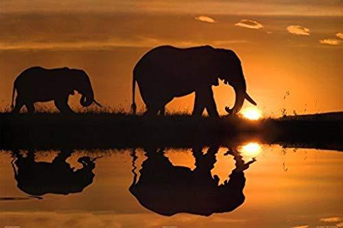 - Buyartforless (24x36) Jim Zuckerman African Silhouette Elephants Art Print Poster