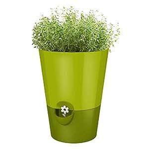 Emsa 514247 Fresh Herbs - Maceta (13 cm, ABS), color verde