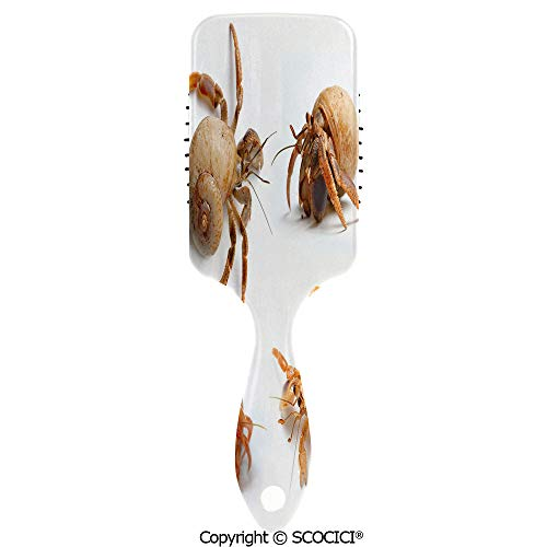 - Detangling Hair Brush Soft Comb Cushion Air Sea Animals Theme Set of Hermit Crabs from Caribbean Sea Print Hairbrush for Women Reducing Hair Breakage and Frizzy, No More Tangle