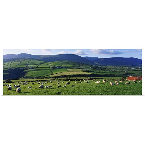 GREATBIGCANVAS Poster Print Entitled Pastoral Scene Near Anascual, Dingle Peninsula, County Kerry, Ireland by The Irish Image Collection 60