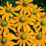 Outsidepride Rudbeckia Hirta Green Eyes - 5000 Seeds