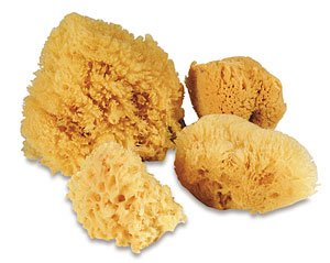 Hermit Crab Sponges (Hermit Crab NATURAL SEA SPONGE SPONGES - For Cage & Water Dish - Multiple Sizes (2 INCH - 3 INCH SIZE))