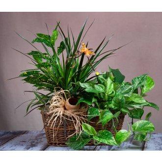 ABQ Florist Signature Wicker Planter - Fresh Flowers Hand Delivered in Albuquerque Area