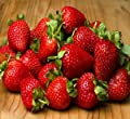 20 OZARK BEAUTY STRAWBERRY PLANTS - Organic Non GMO Heirloom Fruit - Bare Root