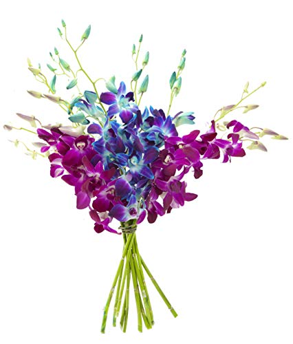 Kabloom Midnight in the Tropics Bouquet of Blue and Purple Orchids from Thailand