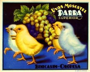 - MAGNET Spain Spanish Baby Chick Chicken Grape Fruit Crate Magnet Art Print