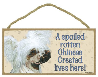 "(SJT60706) A spoiled rotten Chinese Crested lives here wood sign plaque 5"" x 10"""