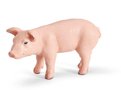 miniature pot belly pigs - 3