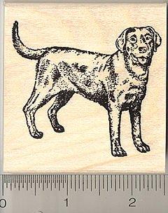 Black Labrador Retriever Dog Rubber Stamp - Wood Mounted