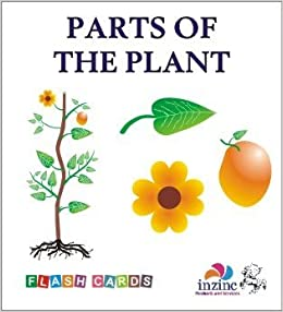 Buy Parts Of The Plant Flash Cards For Kids Book Online At Low