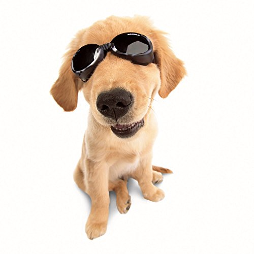 Ils Dog Sunglasses Black/Small by Doggles