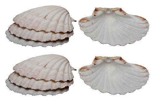 HIC Harold Import Co. 45679 Company Baking Shells (Set of 8), 4, Natural Seashell