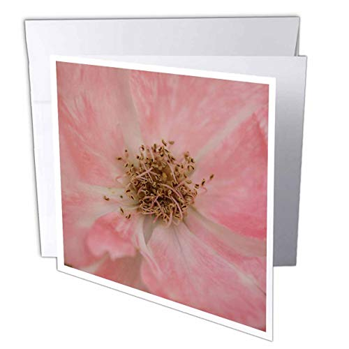 (3dRose Stamp City - Flowers - Macro Photo of The Curly Stamens Among Pink Petals of a Rose. - 12 Greeting Cards with envelopes (gc_315581_2))
