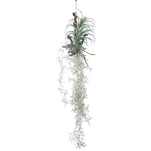 人工観葉植物 アレジメント着生64(12個セット) bb200 吊るしタイプ (代引き不可) インテリアグリーン 造花 HANGING B07T48DR6Z