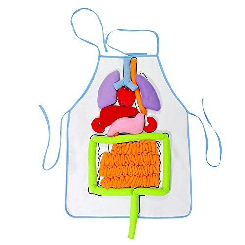 per DIY 3D Plush Stuffed Viscera Internal Organs Model Heart+Intestine+Stomach+Liver with Transparent Apron for Kindergarten Kids Children Physiological Education Toy ()