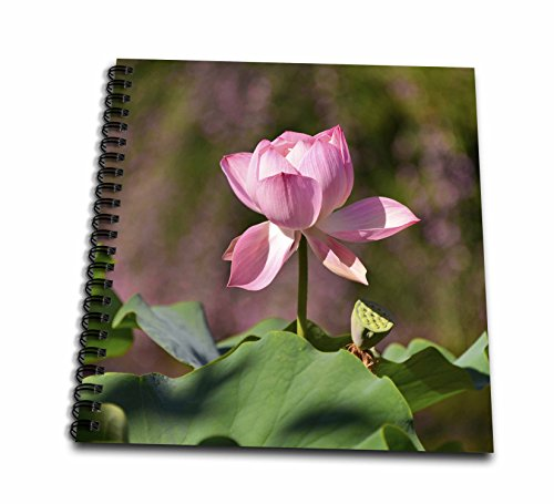 3dRose Danita Delimont - Flowers - Usa, Oregon, Portland. Lotus flower in Lan Su Chinese Garden. - Memory Book 12 x 12 inch (db_279294_2)