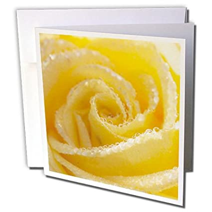 Amazon 3drose yellow rose flower with water droplets 3drose yellow rose flower with water droplets greeting card 6quot x 6quot mightylinksfo