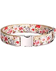 "waaag Pet Collar, Dog Collars for Girls, Fresh Flower Wild Floral Vintage Dog Collar Cat Collar Hound Collar (Summer Blooms, S 12""-16"" Neck)"