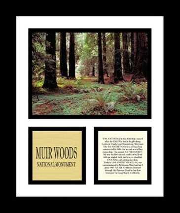 Pro Tour Memorabilia NP79A-0C8 Muir Woods National Monument (Memorabilia Tour Pro Photograph)