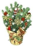 Live Tabletop Christmas Tree with Christmas Decorations & Lights