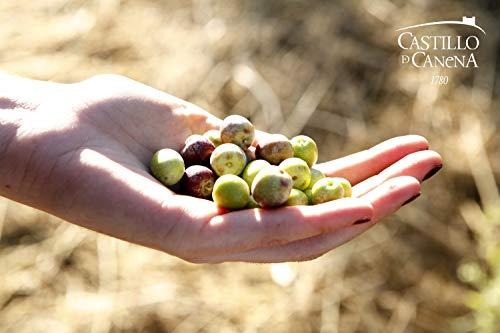Buy olive oil 2017