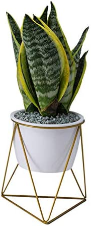Large Modern Plants and Planters,7.09 inch Planter Pots Indoor Garden White Ceramic Round Bowl with Metal Stand Drainage Cactus and Plant Container for Succulent Planter Cactus
