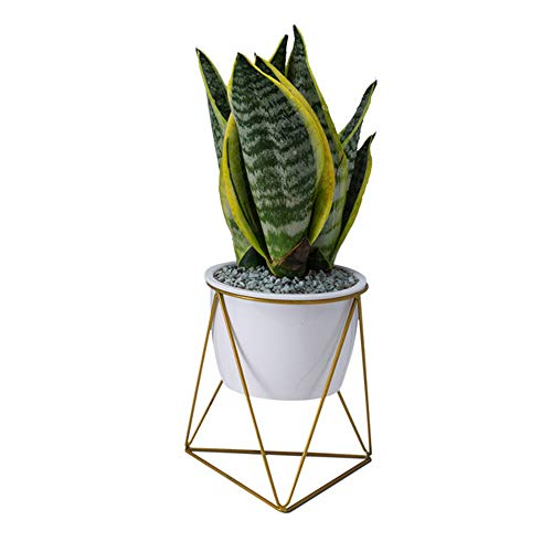 Containers Planters Urns Garden (Large Modern Plants and Planters,7.09 inch Planter Pots Indoor Garden White Ceramic Round Bowl with Metal Stand/Drainage Cactus and Plant Container for Succulent Planter Cactus)